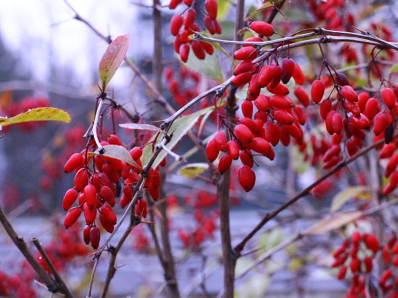 Приворотные травы завернуты в красные нити сильный приворот фото делал